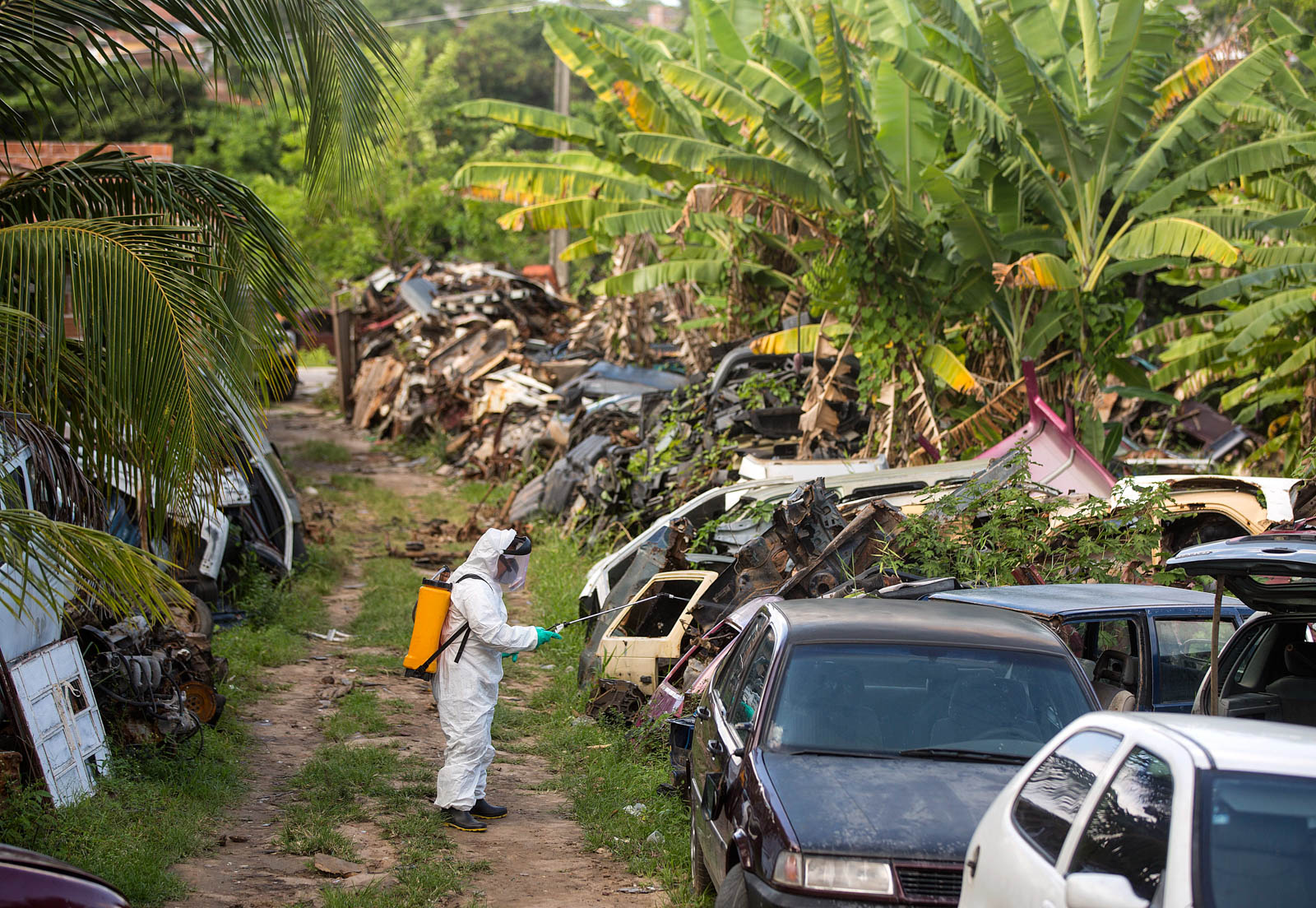 Worker in protective suit spraying insecticide in junkyard surrounded by tropical trees (© AP Images)