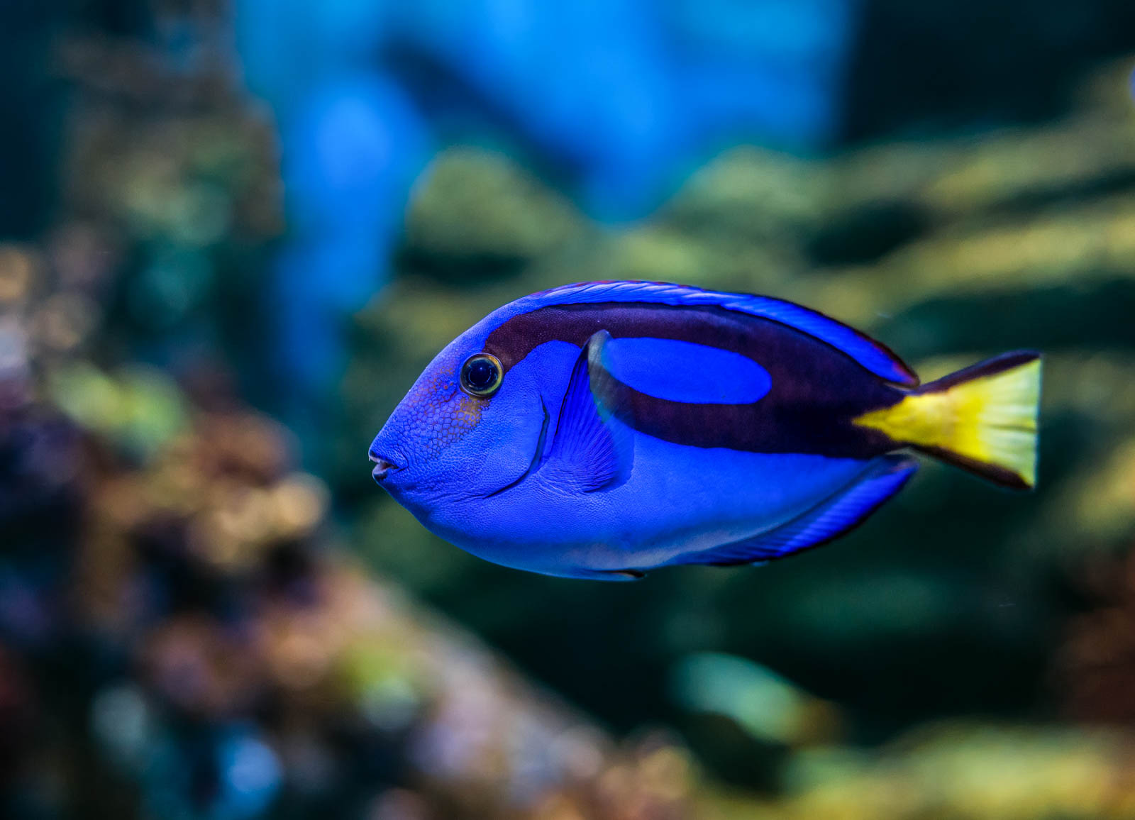 To protect coral reefs keep dory swimming shareamerica for Fish swimming video
