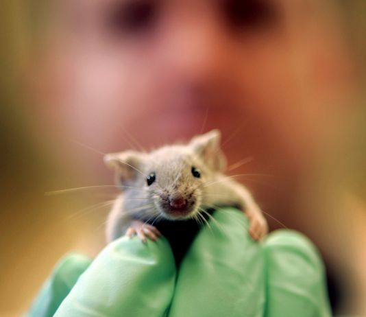 A researcher holding a mouse (© AP Images)