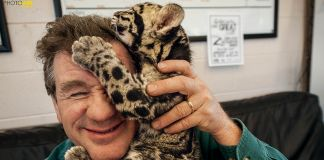 A baby leopard crawling on a man's head (© Grahm S. Jones/National Geographic Photo Ark)