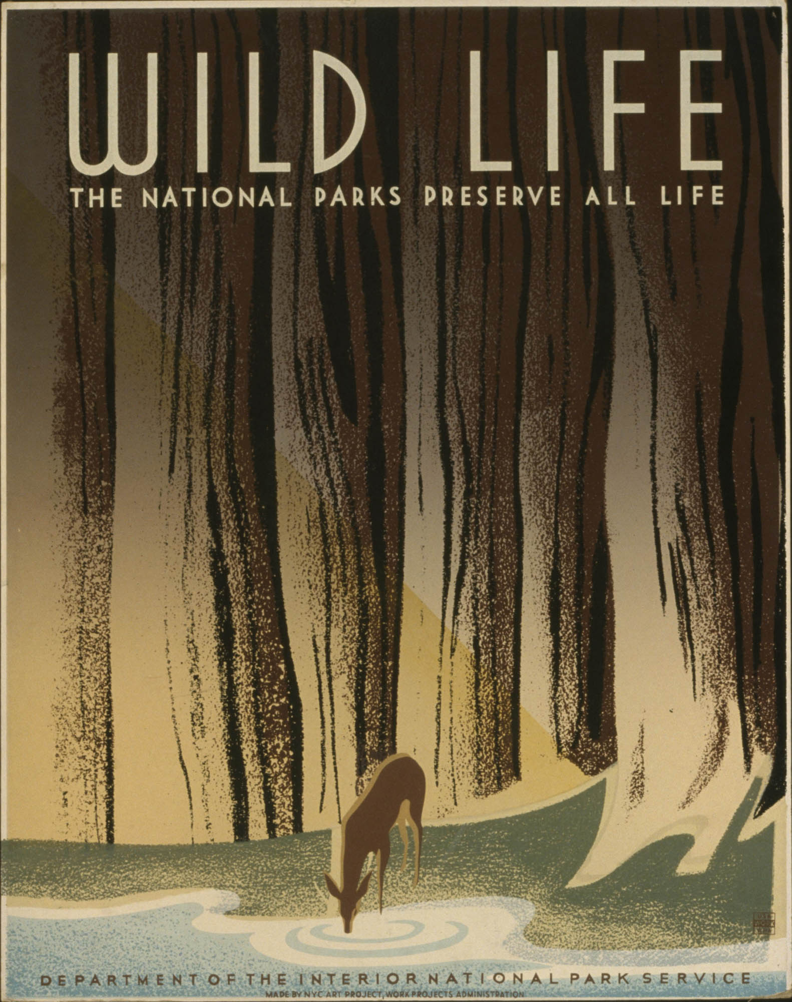 Wild Life From 1935 to 1936, as part of the New Deal under FDR, the Works Progress Administration, (or WPA) Federal Art Project created posters to publicize local exhibits, theater productions and health and educational programs. Among the most well-known and revered of this collection are the posters advertising the National Parks, considered the most ecologically and geographically distinct and beautiful places within the United States. The White-Tailed Deer are among the most common wild animal within the United States, and have relatives spanning the whole of the Western Hemisphere. Regardless of the commonality of the species, the WPA makes a note here to protect and be mindful of all wildlife within the United States, whether it be endangered or otherwise. (Library of Congress)