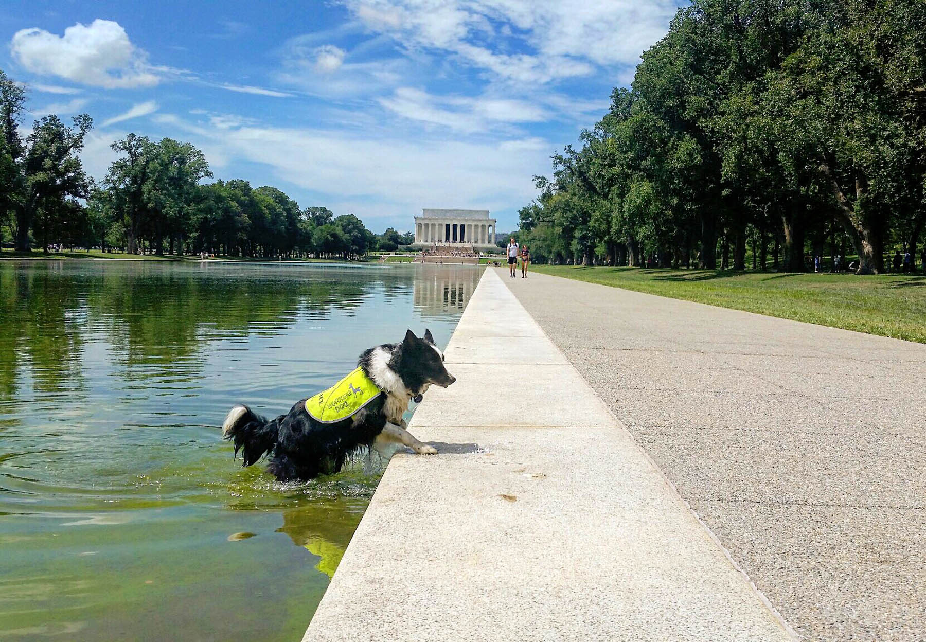 Dog climbing out of pool with Lincoln Memorial in background (Courtesy of Doug Marcks)