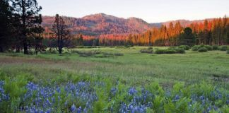 Flower-filled meadow leading to rolling hills in Yosemite National Park (© AP Images)