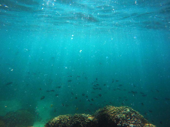 Peixes nadam ao longo de um trecho de corais que sofreram branqueamento no Havaí (© AP Images)