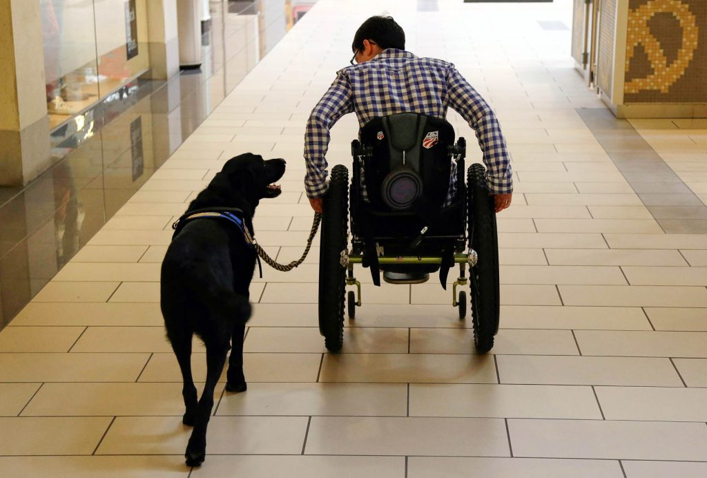 Man in wheelchair holding leash of dog (© AP Images)