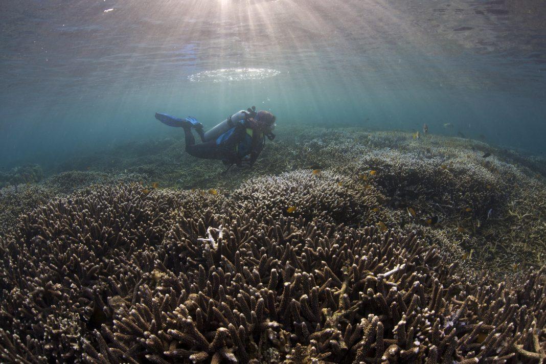Diver at reef (Steve de Neef)