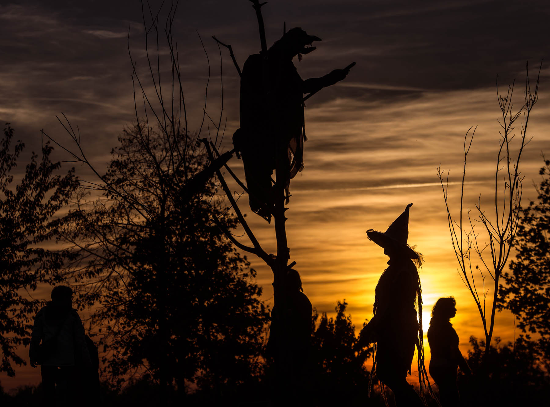 Silhouettes of a figure in a tree with a broom and people dressed as witches walking near it (© AP Images)