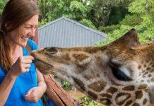 Woman feeding a giraffe (Courtesy of Shannon O'Donnell)