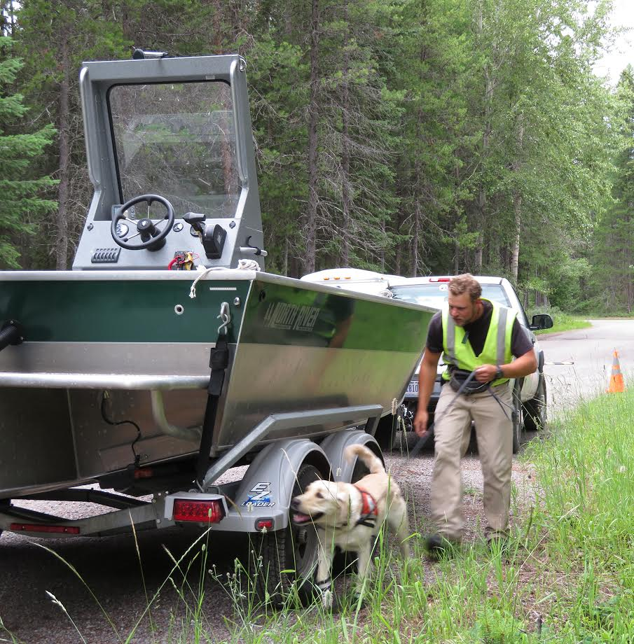 Dog sniffing boat with man following (NPS/A.W. Biel)