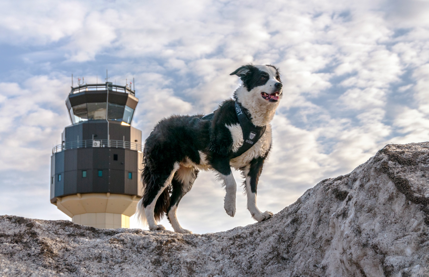 Dog standing on rock at airport (Courtesy of airportk9.org)
