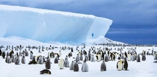 Large group of penguins sitting on ice (Thinkstock)