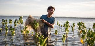 Hombre cargando una red a través de un bosque de manglares en reciente desarrollo (© Interface)