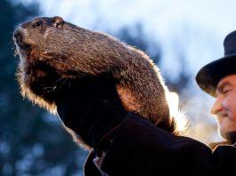 Man holding groundhog (© AP Images)