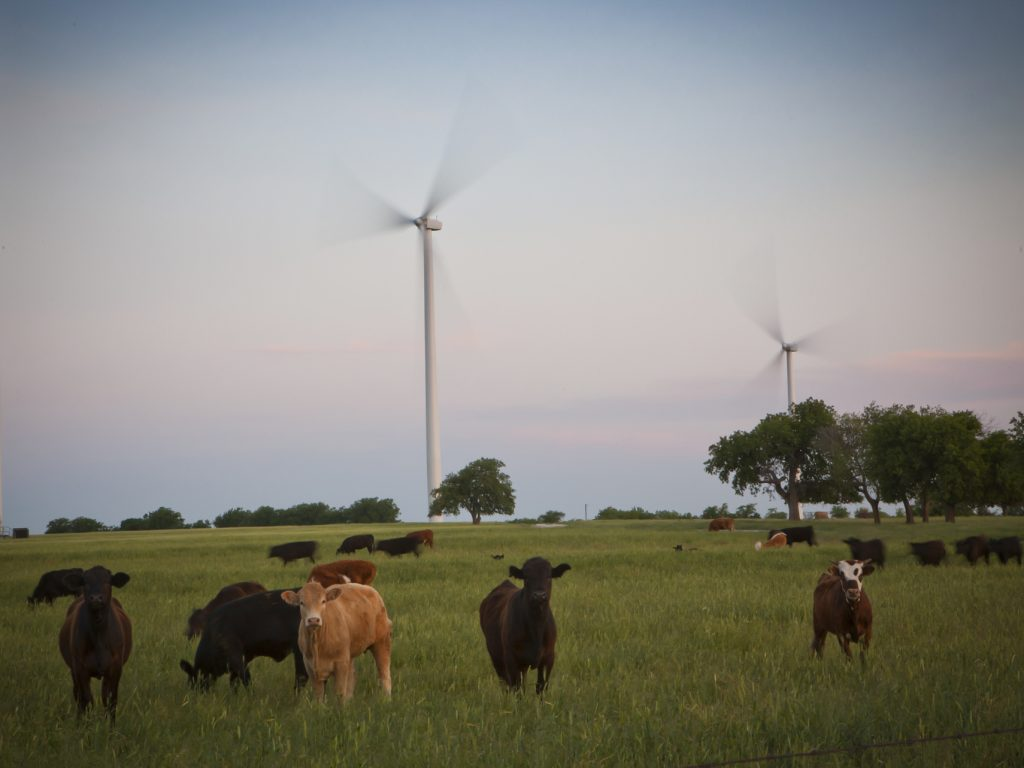 Cows on grassland near wind turbines (Courtesy of DME)