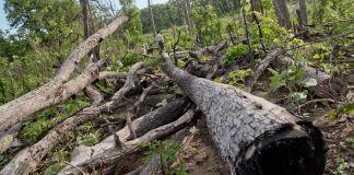 Illegal logging in Burma (© AP Images)