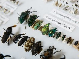 Bugs in a display case (ASU Now/Deanna Dent)