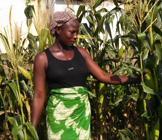 Woman standing among corn stalks (AUN-API)