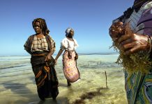 Women standing in shallow ocean (© Marco Longari/AFP/Getty)