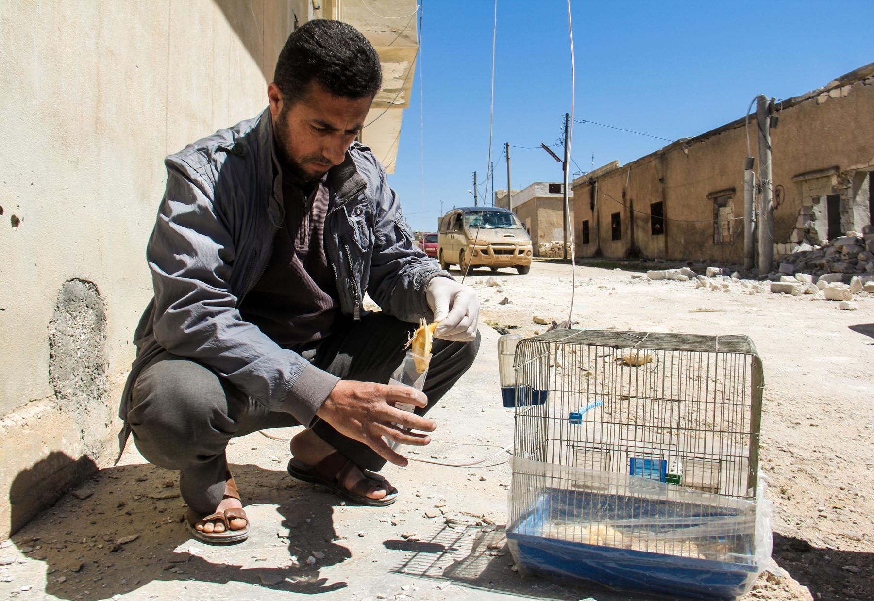 Homem sírio recolhe um pássaro morto em decorrência de ataques químicos (© AFP via Getty Images)