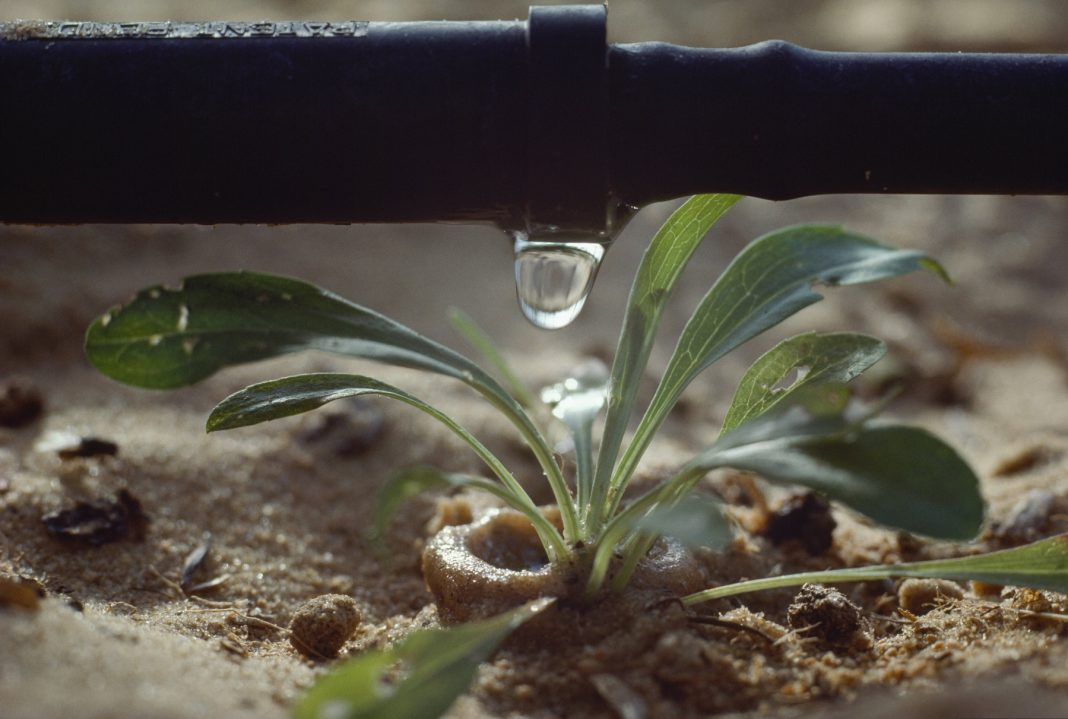 Pipe dropping water drop onto plant (James L. Stanfield/National Geographic/Getty Images)