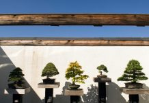 Row of bonsai trees (© Pete Souza/Chicago Tribune/MCT Via Getty)