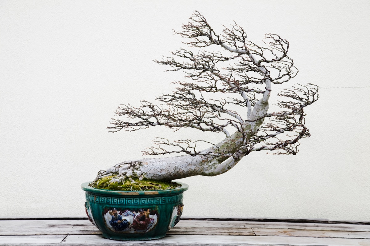Tree growing from pot (© Benjamin C. Tankersley/Washington Post via Getty Images)