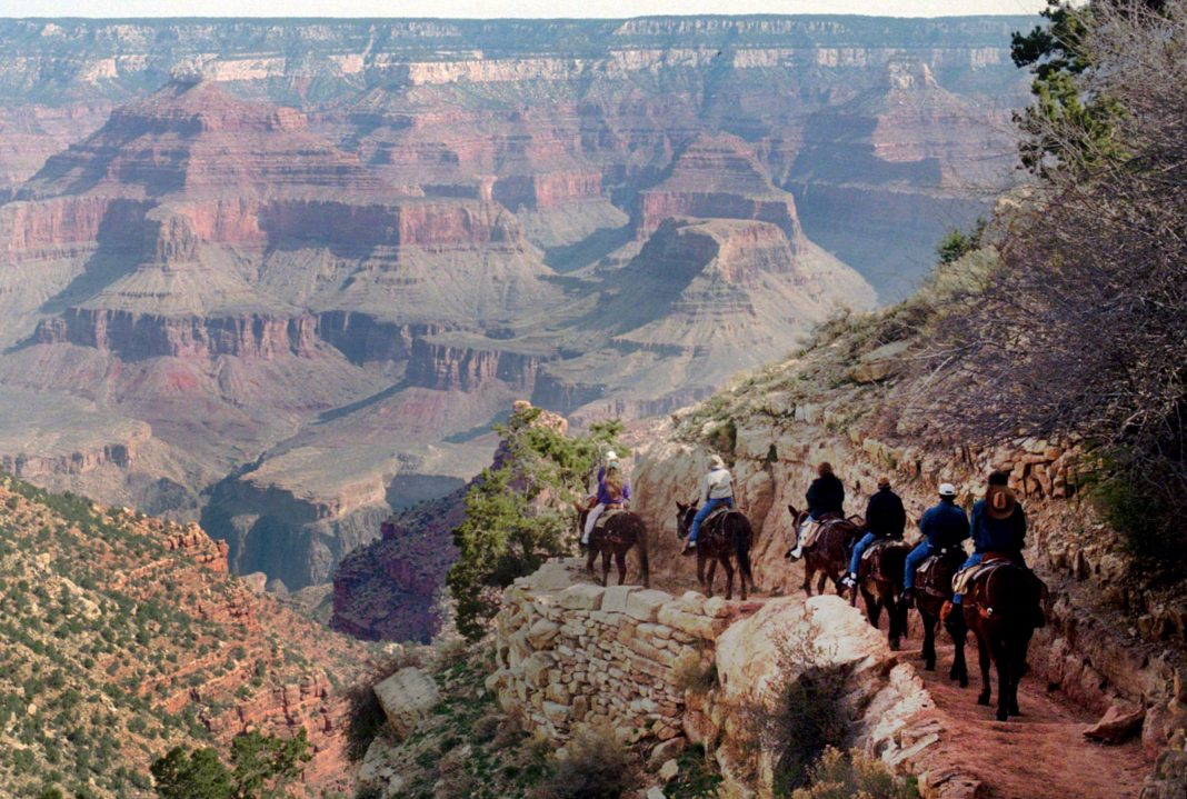 Tourists riding mules into the heart of the Grand Canyon (© AP Images)