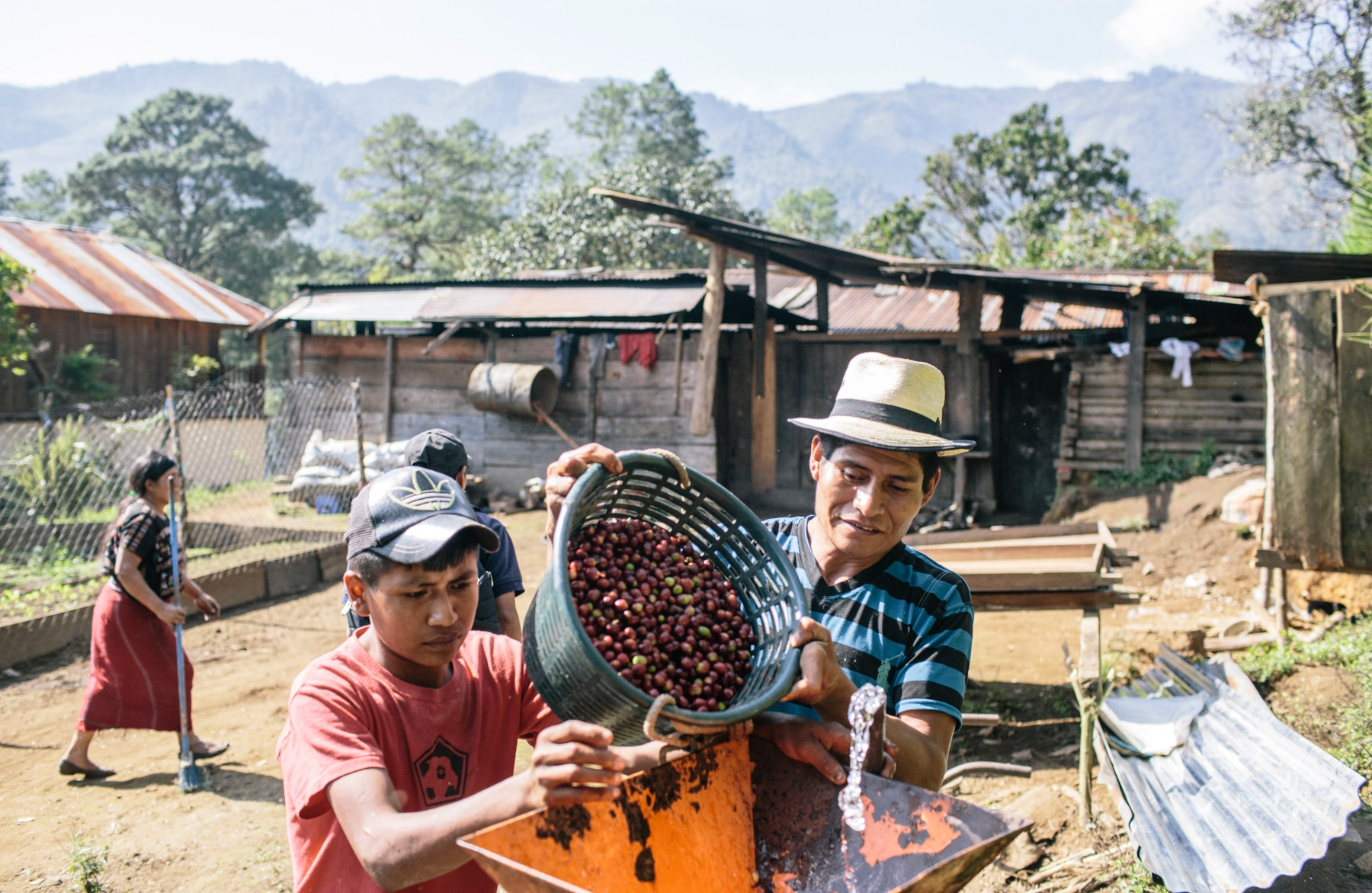 Two farmers pouring coffee beans into a machine (Greg Kahn for USAID)
