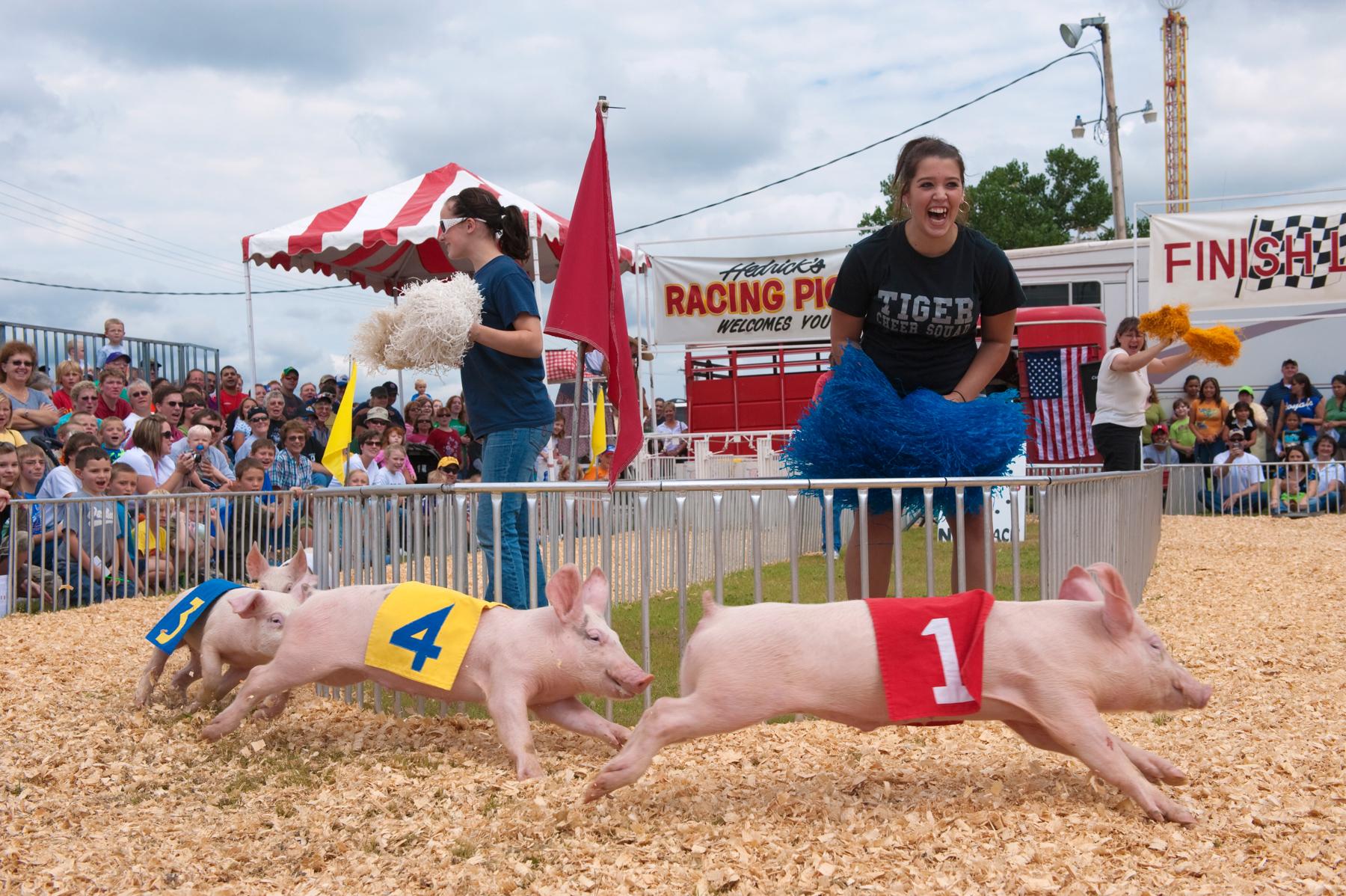 Des jeunes femmes poussant des cris d'encouragement à des cochons sprintant vers la ligne d'arrivée d'une course (© Joel Sartore/National Geographic)