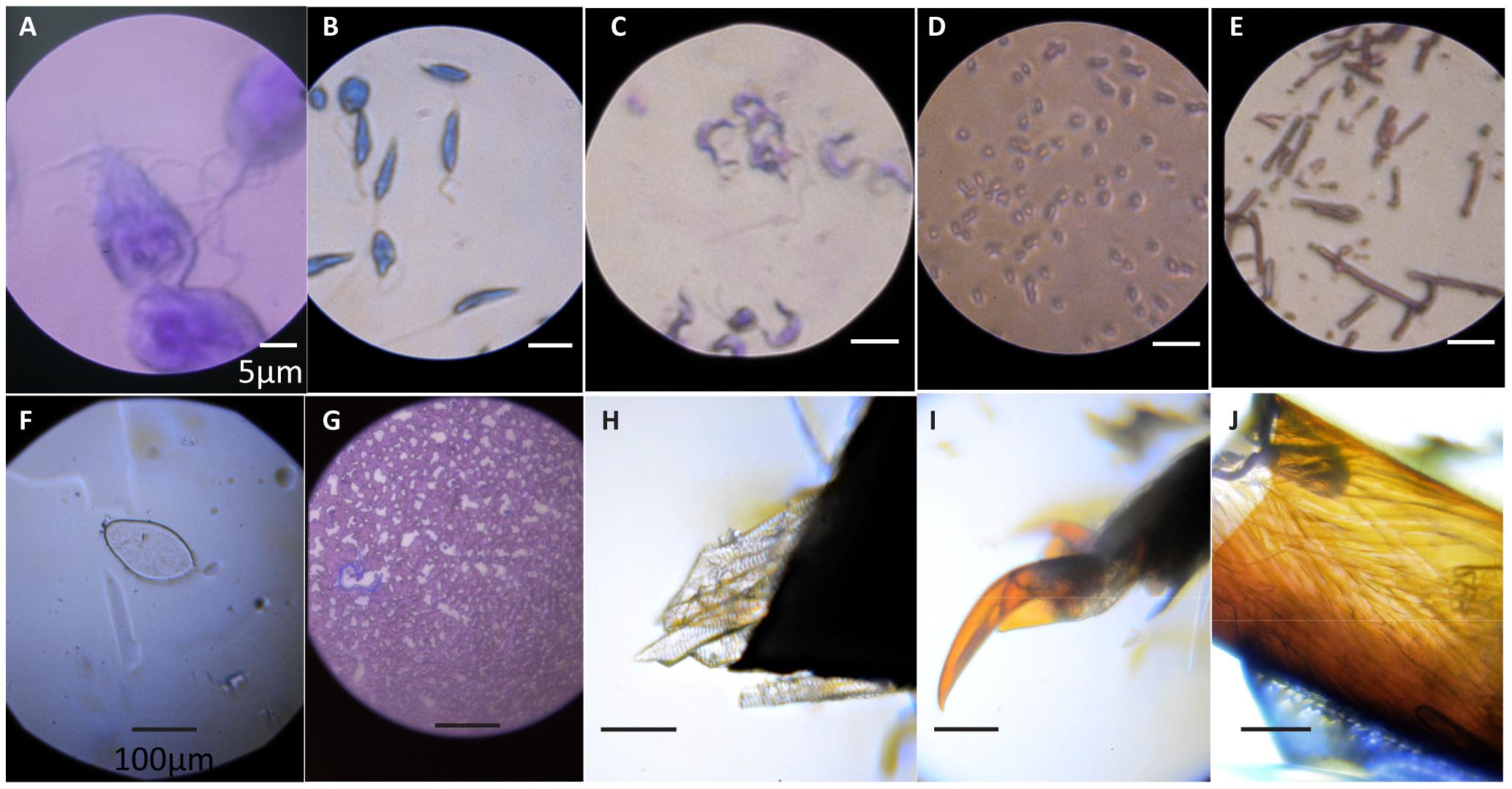 Foldscope images (Cybulski et al./PLOS ONE)