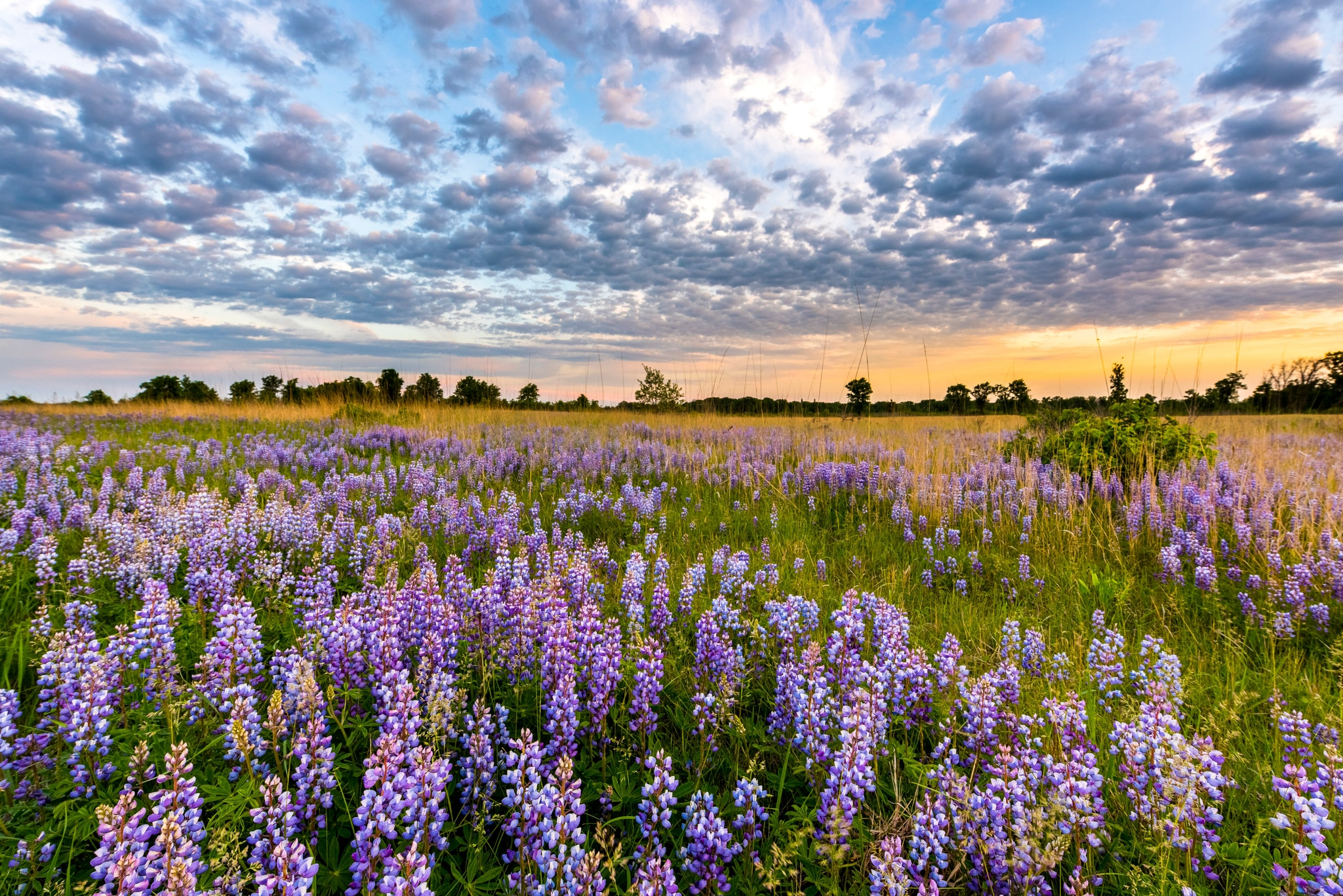 Landscape of wild purple flowers against a clouded sky (© Joe Mamer Photography/Alamy Stock Photo)