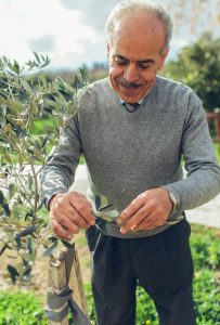 Man checking leaves of olive tree (USAID/Bobby Neptune)