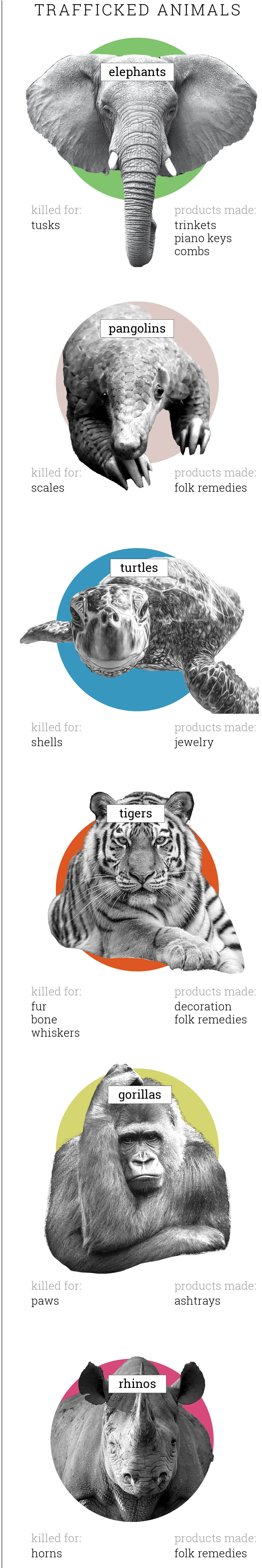 Graphic showing trafficked animals and the products they are killed for (State Dept./Julia Maruszewski; Images © AP Images, Shutterstock)
