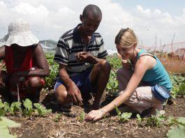 Trois personnes en train de planter dans un jardin (USAID)