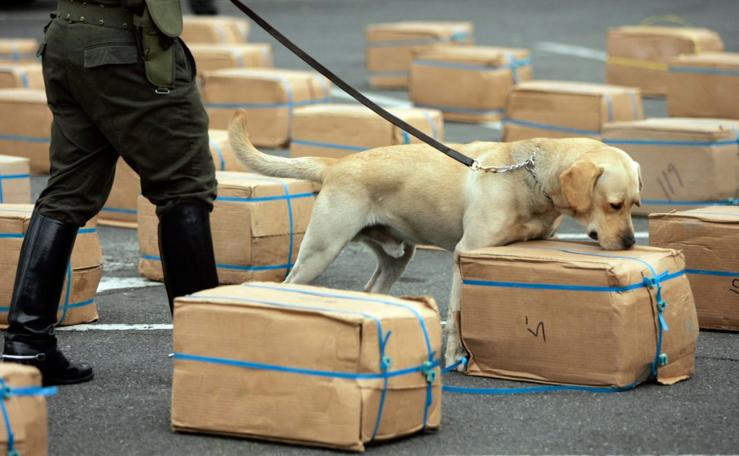 Dog on leash sniffing packages (© AP Images)