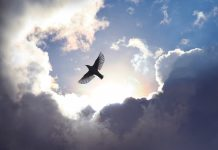 Bird flying through dramatic cloudscape (© Simon Alvinge/Alamy)