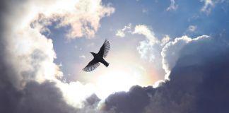 Pássaro voa em céu carregado de nuvens (© Simon Alvinge/Alamy)