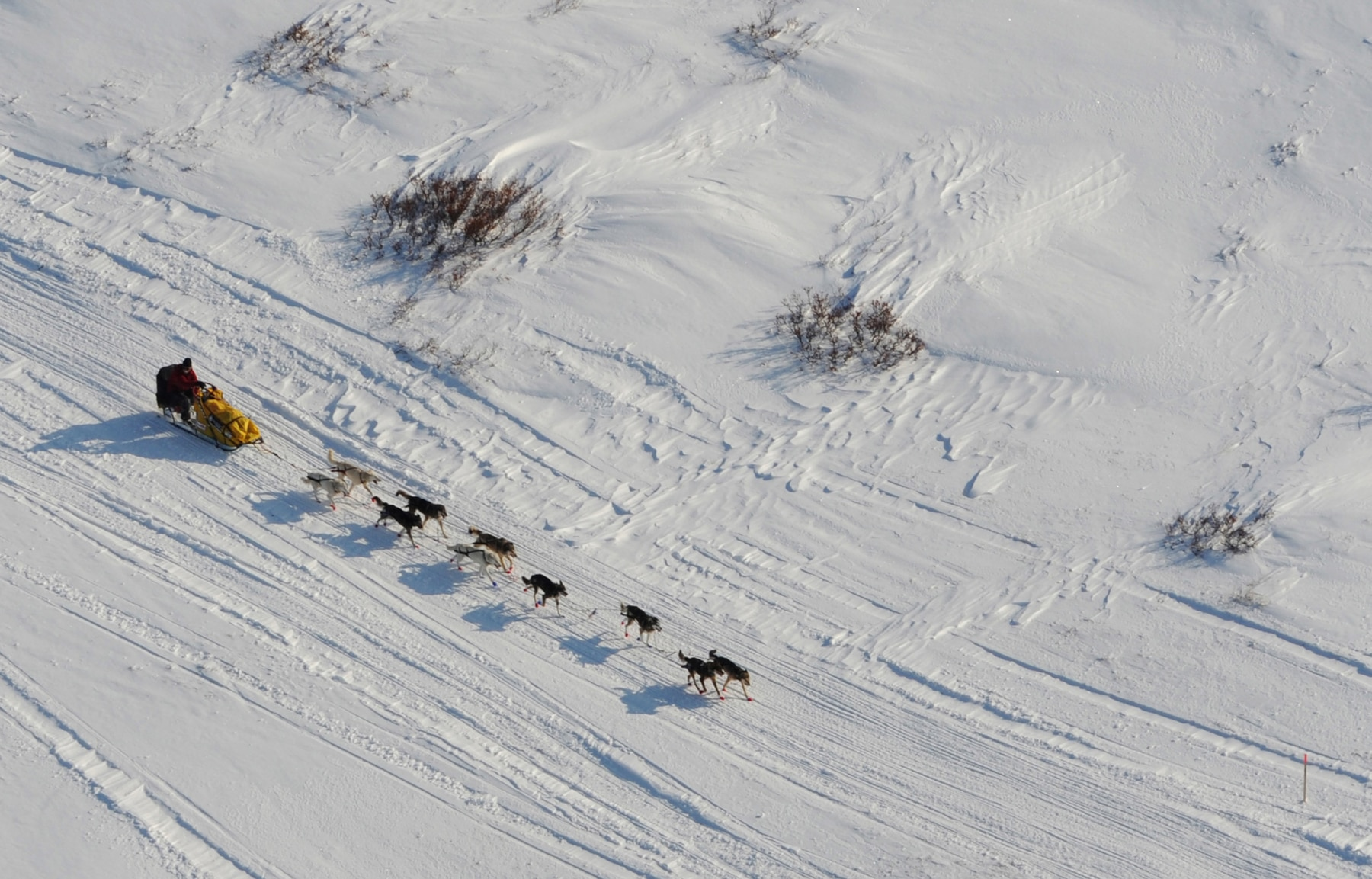 Team of dogs pulling a sled with a man steering across a vast snow plain (© Bill Roth/Anchorage Daily News/MCT/Getty Images)