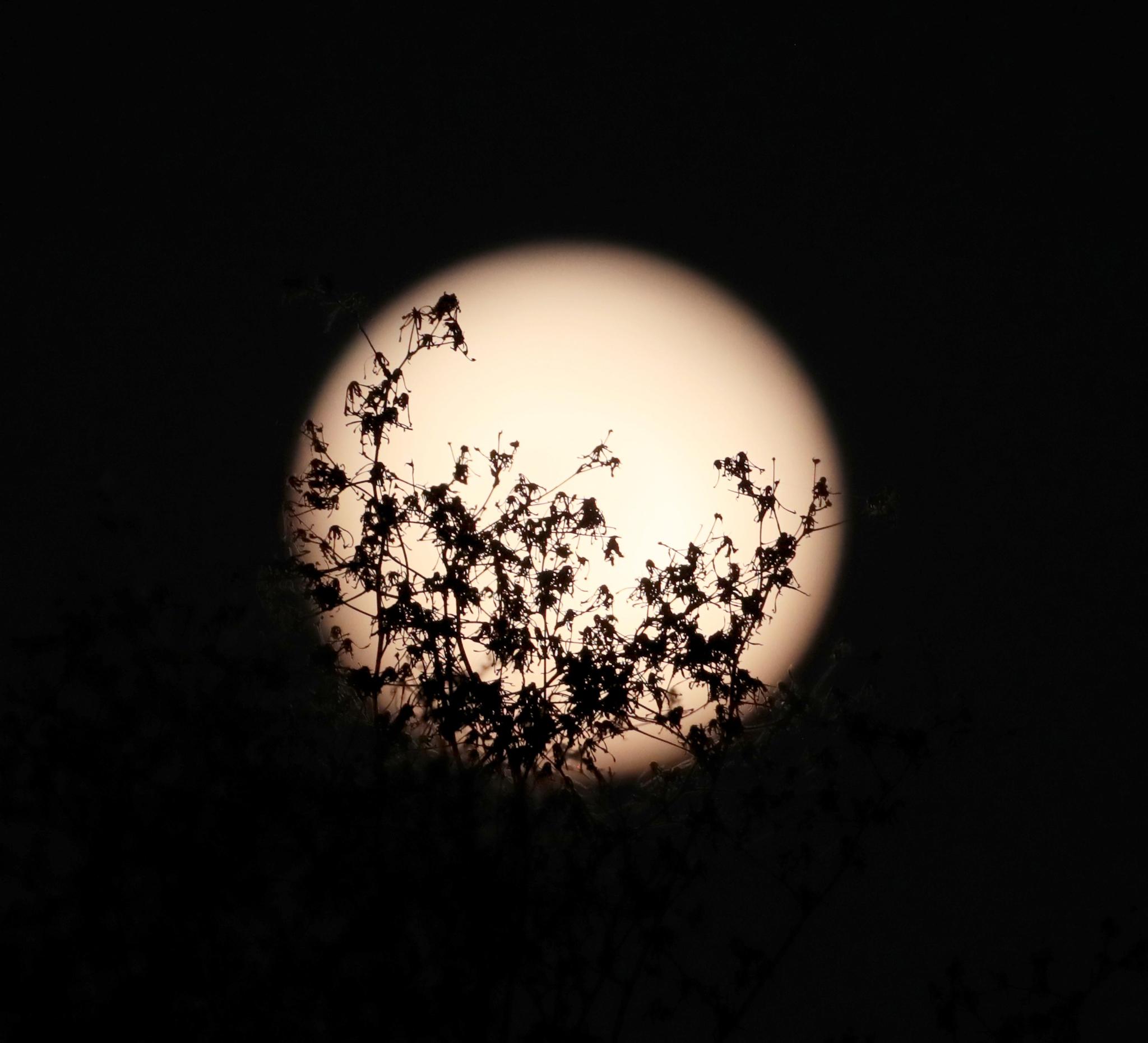 چاندنی میں دکھائی دینے والا جھاڑیوں کا ہیولہ۔ (© Xinhua/Li Ying via Getty Images)