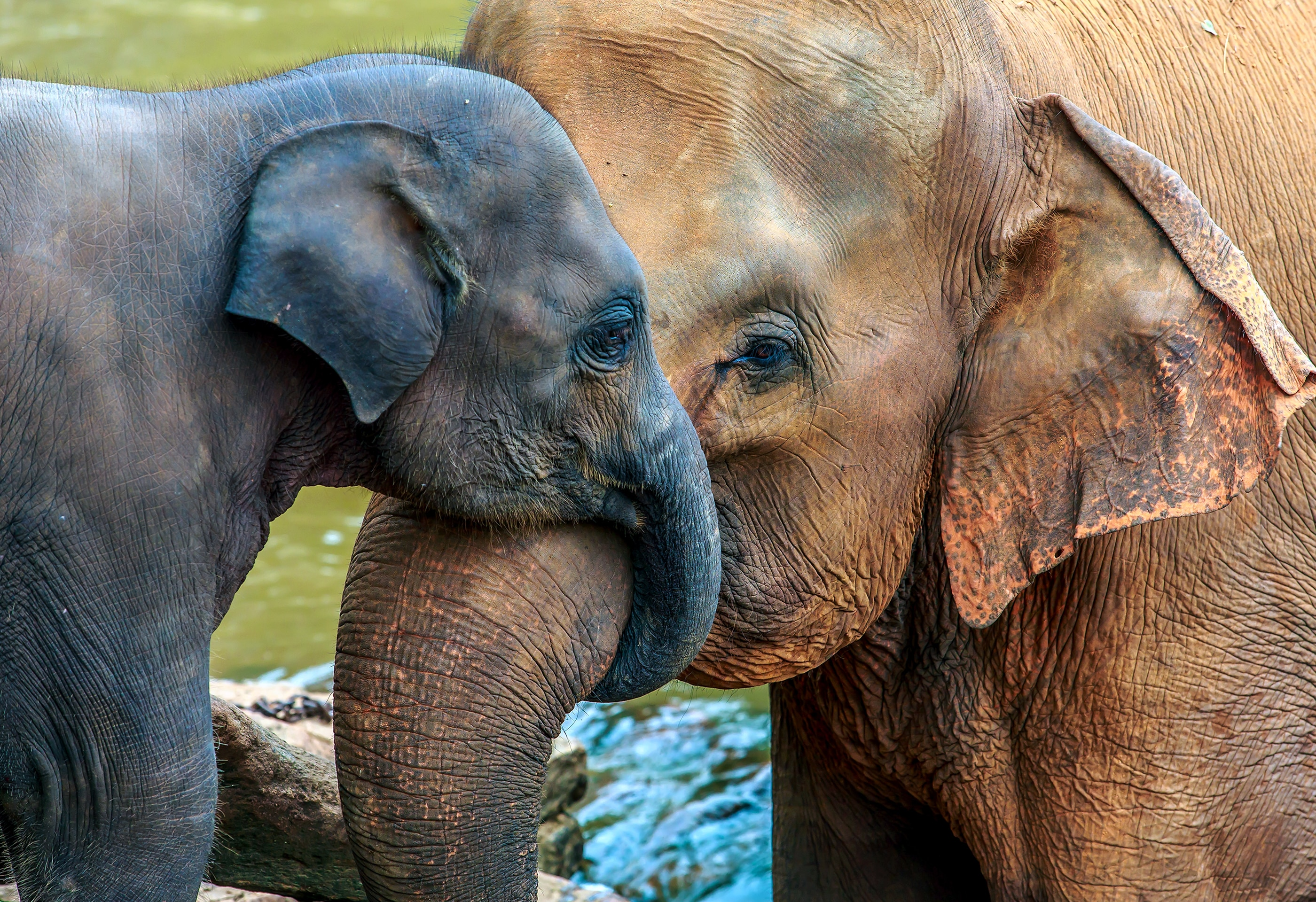Elephant and baby (Shutterstock)
