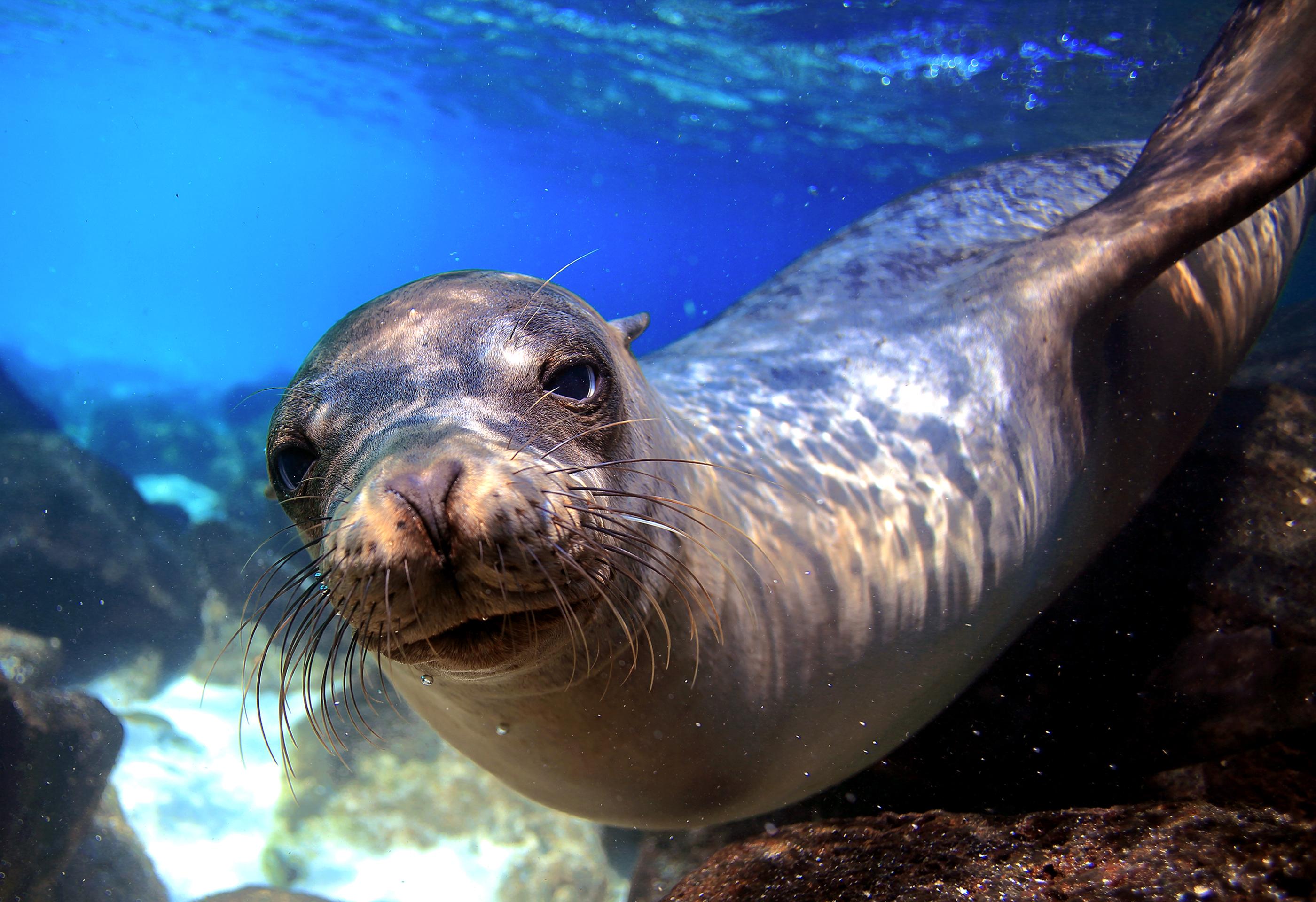 León marino (Shutterstock)