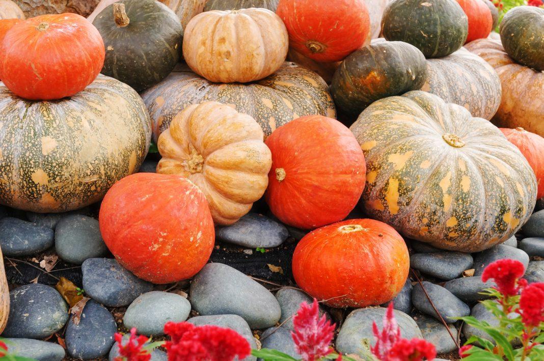مجموعة من ثمار اليقطين مصفوفة على الأرض. (Shutterstock)