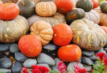 Array of pumpkins on ground (Shutterstock)