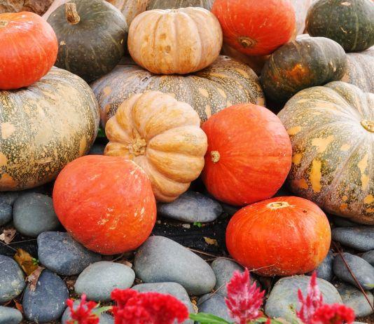 Plusieurs variétés de citrouilles posées en vrac sur le sol (Shutterstock)