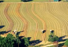 Aerial view of harvesting machines in a Georgia peanut field (© David R. Frazier Photolibrary, Inc./Alamy)