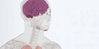 Drawing of human body showing internal organs (State Dept./J. Maruszewski)