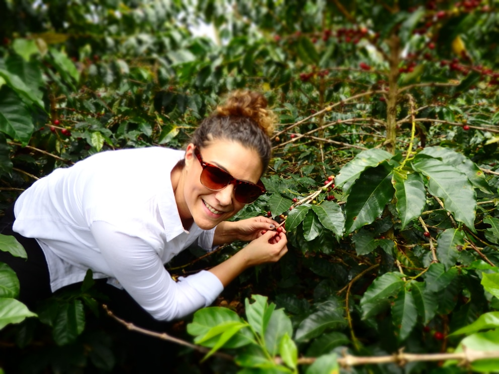 Woman picking coffee beans from plant (© City Girl Coffee Company)
