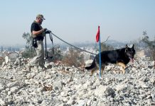 Man walking dog on rubble (Courtesy photo)