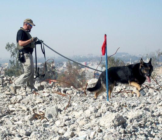 Man walking dog on rubble (Courtesy photo)