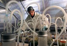 Student in lab coat standing among tubes and flasks in lab (© Helen H. Richardson/Denver Post via Getty Images)